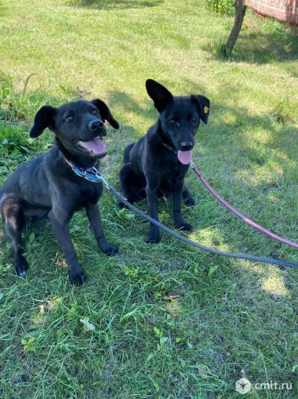 Стерилизованные собаки - ответственным людям. Фото 1.