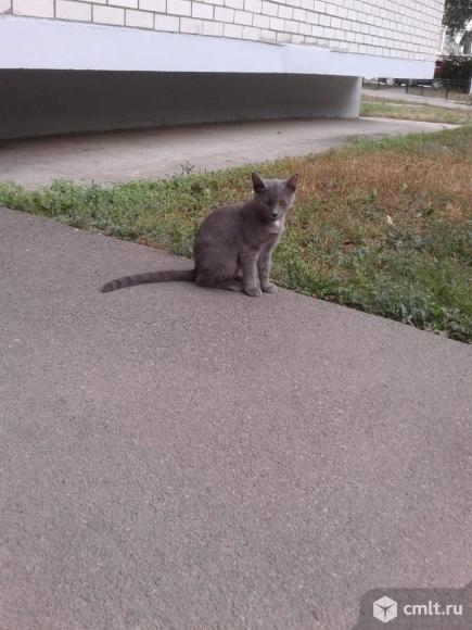 Котята в хорошие руки. Фото 5.