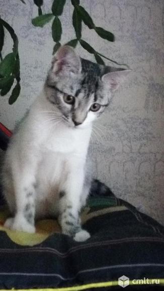 Котенок в добрые руки. Фото 4.