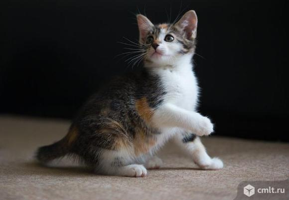 Котенок Корица в дар. Фото 1.