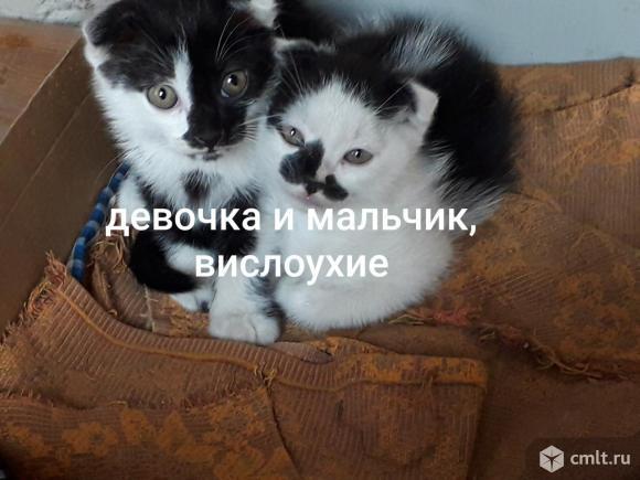 Отдадим котят в добрые руки. Фото 1.