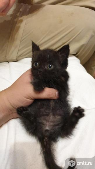 Отдам котенка в добрые руки. Фото 1.