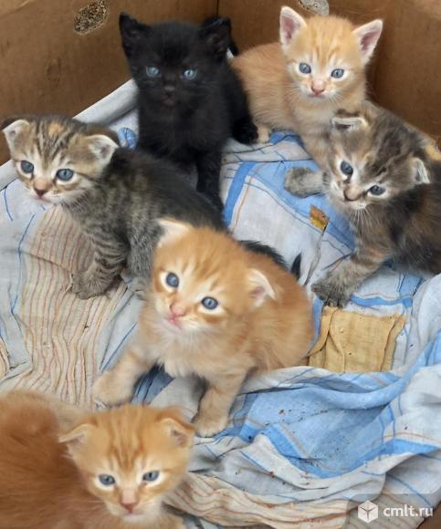 Котята в добрые руки. Фото 11.