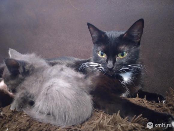 Кошечка в добрые ручки. Фото 1.