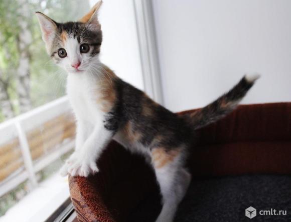 Мимишный котенок в дар. Фото 1.