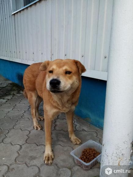 Найдена собака. Фото 1.