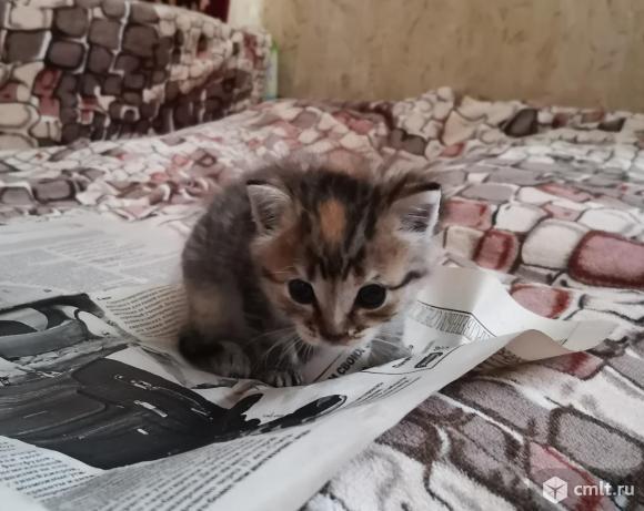 Котята в добрые руки. Бесплатно!. Фото 2.