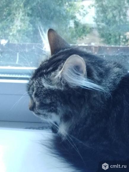 Котик в добрые руки. Фото 1.