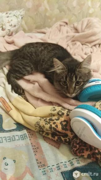 Котик в добрые руки. Фото 2.