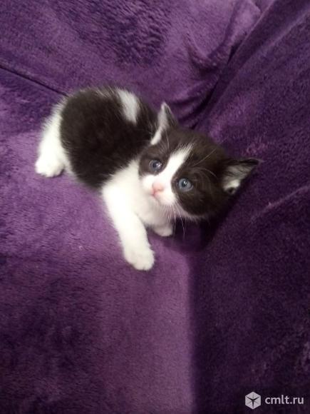 Котята в дар.. Фото 1.