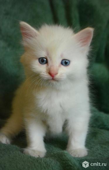 Котенок мальчик в добрые руки. Фото 1.