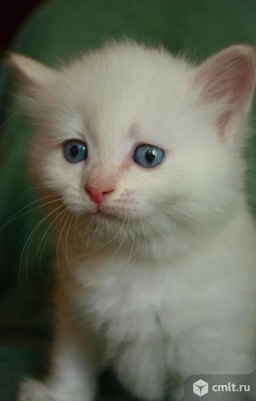 Котенок мальчик в добрые руки. Фото 2.