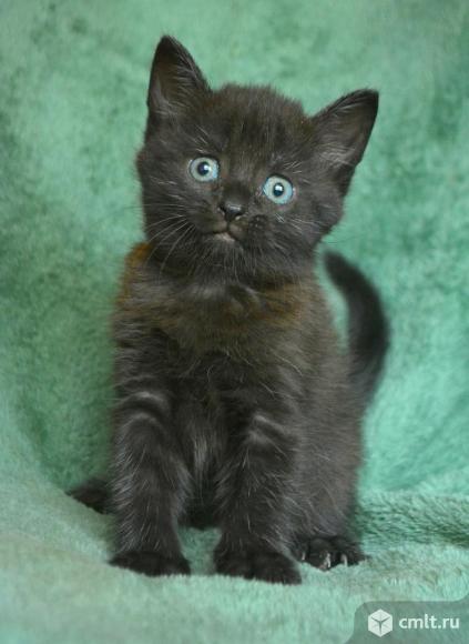 Ищу ответственную семью котенку. Фото 1.