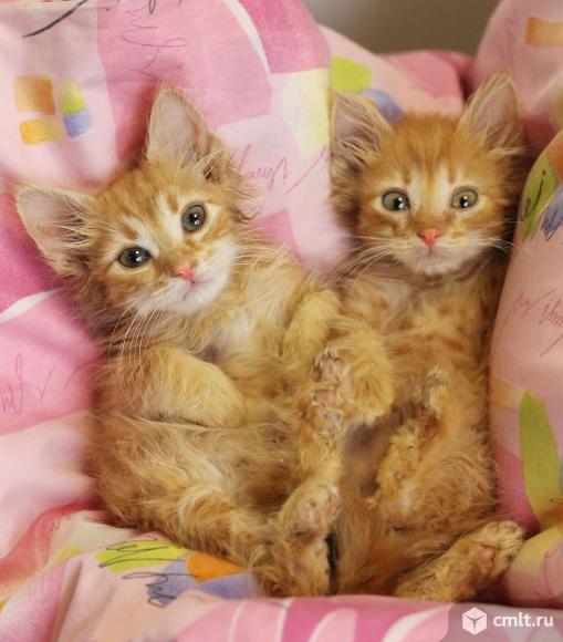 Котята рыжики ищут дом. Фото 3.