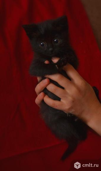 Котенок в добрые руки. Фото 1.