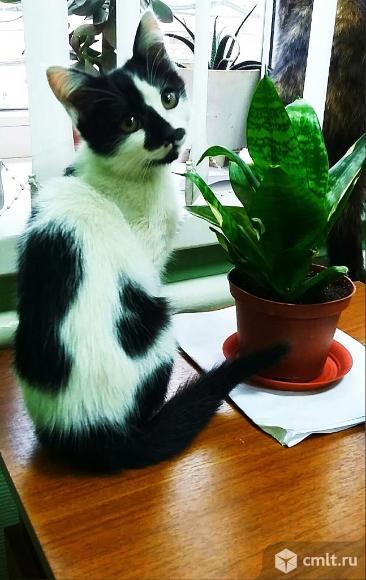 Котенок-девочка с сердечком на спинке. Фото 1.