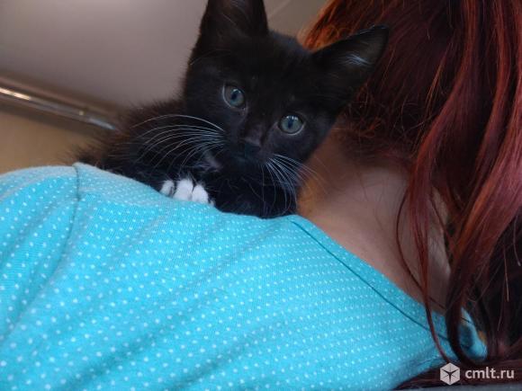 Котят в добрые руки!. Фото 6.