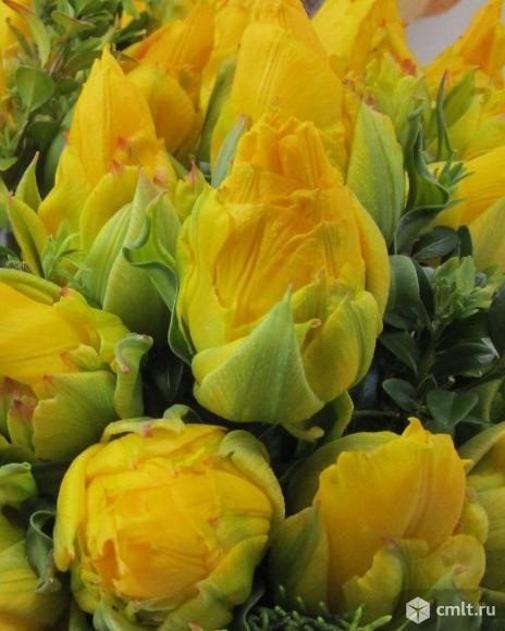 Луковицы первоцветов. Фото 1.