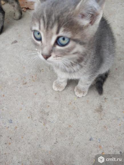 Котята. Фото 10.