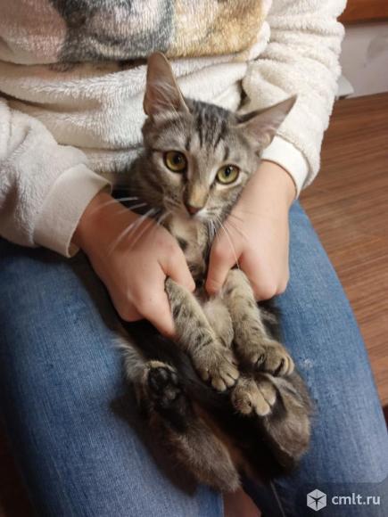 Котенка в добрые руки. Фото 1.