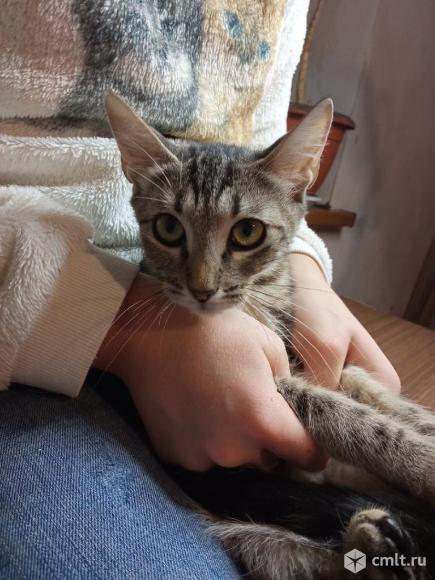Котенка в добрые руки. Фото 4.