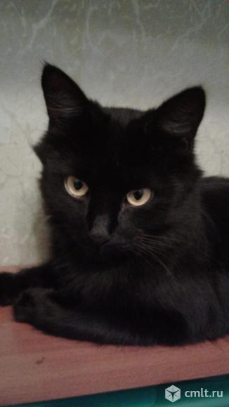 Кошка Багира - грациозная красавица. Фото 1.