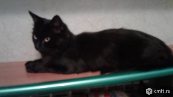 Кошка Багира - грациозная красавица. Фото 2.