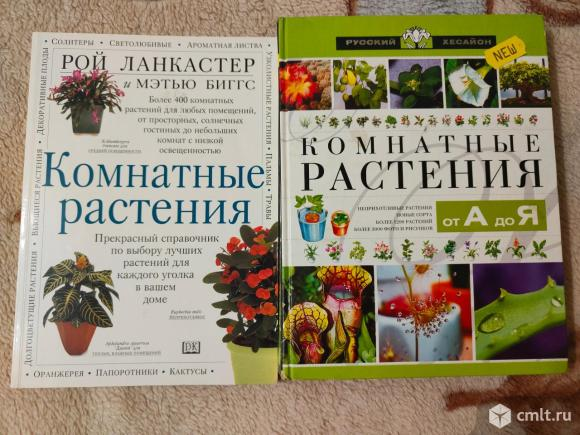 Комнатные растения. Фото 1.
