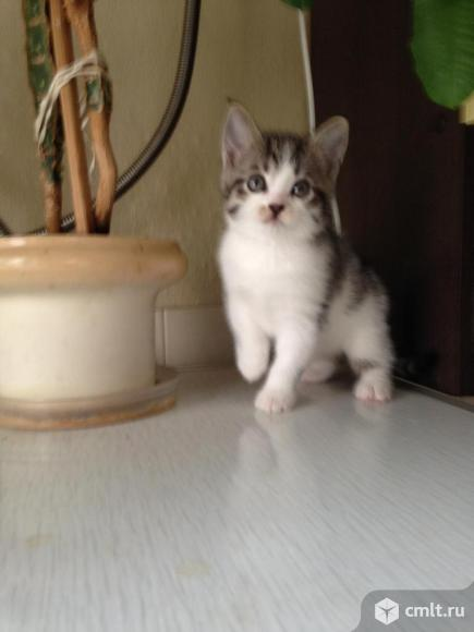 Подарю котят. Фото 1.