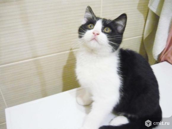 Котенок Феликс в добрые руки. Фото 1.