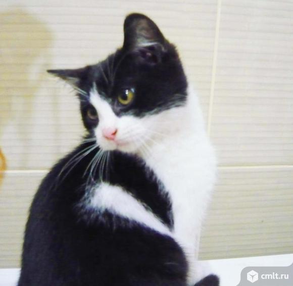 Котенок Феликс в добрые руки. Фото 2.