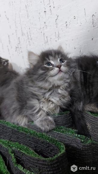 Котята в добрые руки. Фото 6.