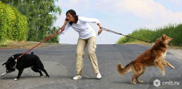 Собачий психолог. Фото 1.