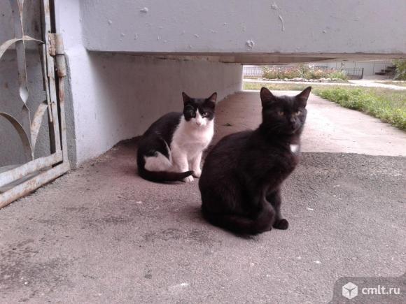 Котята подростки в добрые руки. Фото 1.