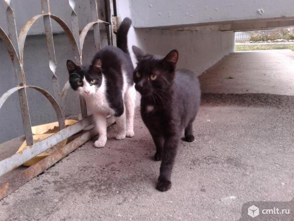 Котята подростки в добрые руки. Фото 3.