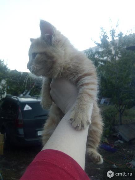Котенок в добрые руки. Фото 3.