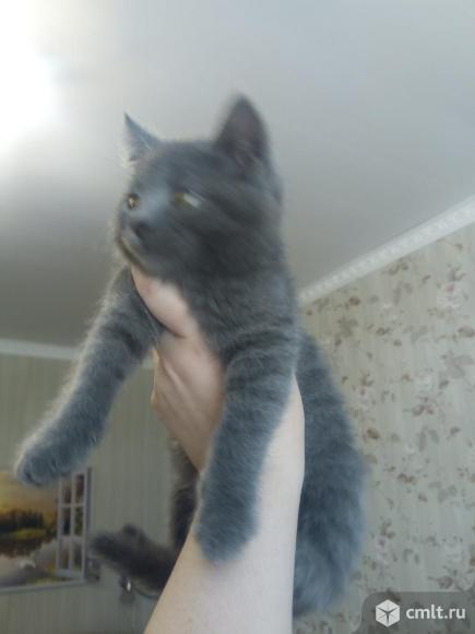 Серый котенок.Мальчик.3 месяца. В добрые руки даром.. Фото 1.