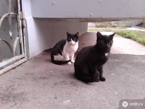 Котята (мальчик и девочка). Фото 1.