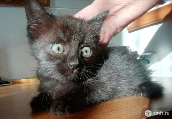 Мальчишки котята. Фото 4.