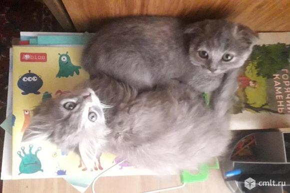 Продаю котят,девочки. Фото 1.