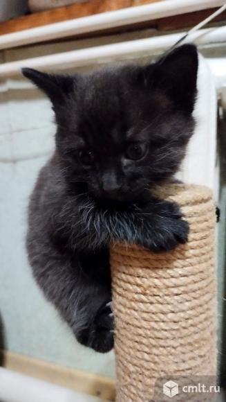 Котята в добрые руки бесплатно. Фото 1.