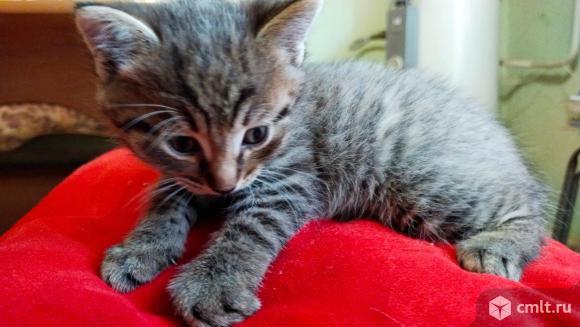 Котята в добрые руки бесплатно. Фото 9.