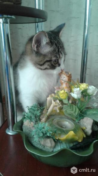 Милые котята ждут новых хозяев.. Фото 1.