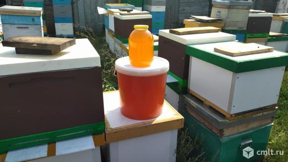 Мёд разнотравье.. Фото 1.