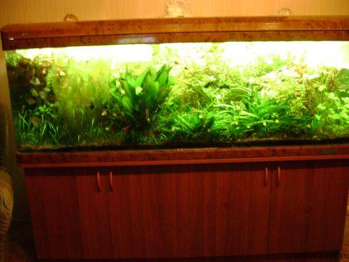 Удобрения для аквариумных растений, сайдекс. Фото 3.