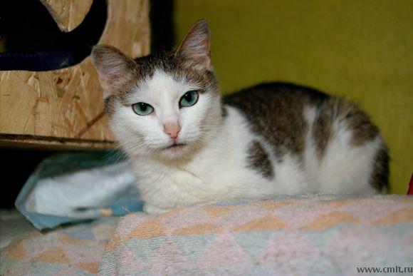 Кошечка Надя с необыкновенными глазами. Фото 1.