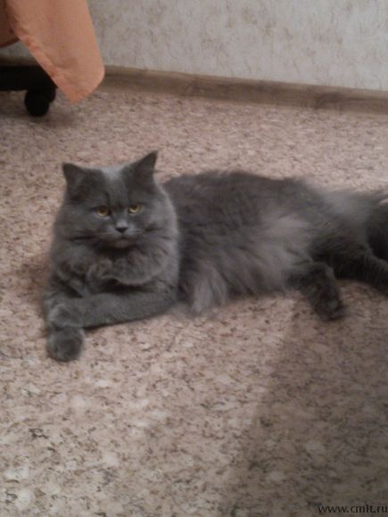 Кот для вязки. Фото 1.