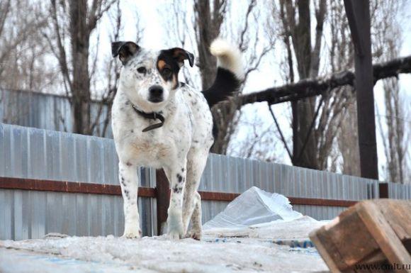 Шикарная собака Дана ищет дом!