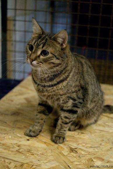 Кошка Ласточка в заботливые руки. Фото 4.