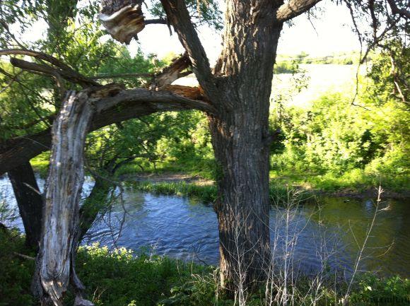 на участке у реки вековые деревья